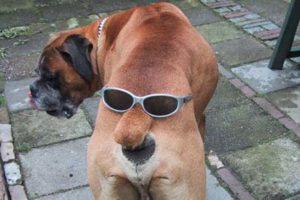 84-cooldog.jpg